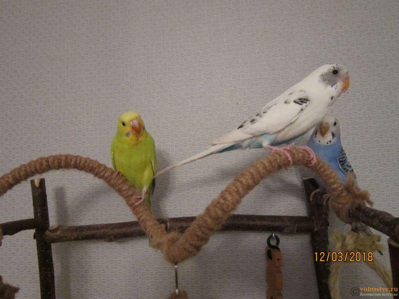 Попугаи Тякшанни - IMG_3750.JPG