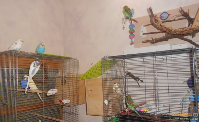 Мои птички - DSCN2617.JPG