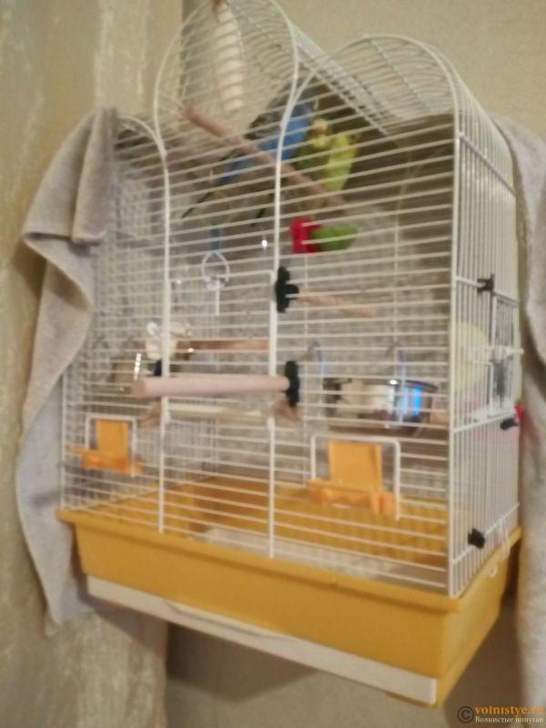 Клетки для попугаев -2 - IMG_20180322_070841.jpg