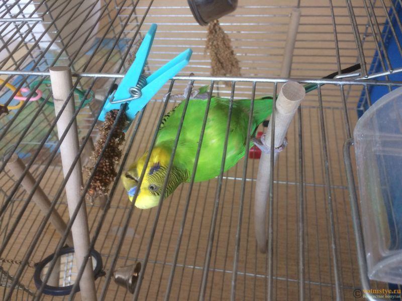 птичка ест веточку - IMG_6797.JPG