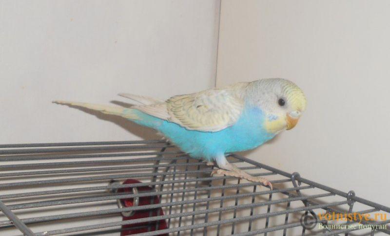 Мои птички - DSCN2661.JPG