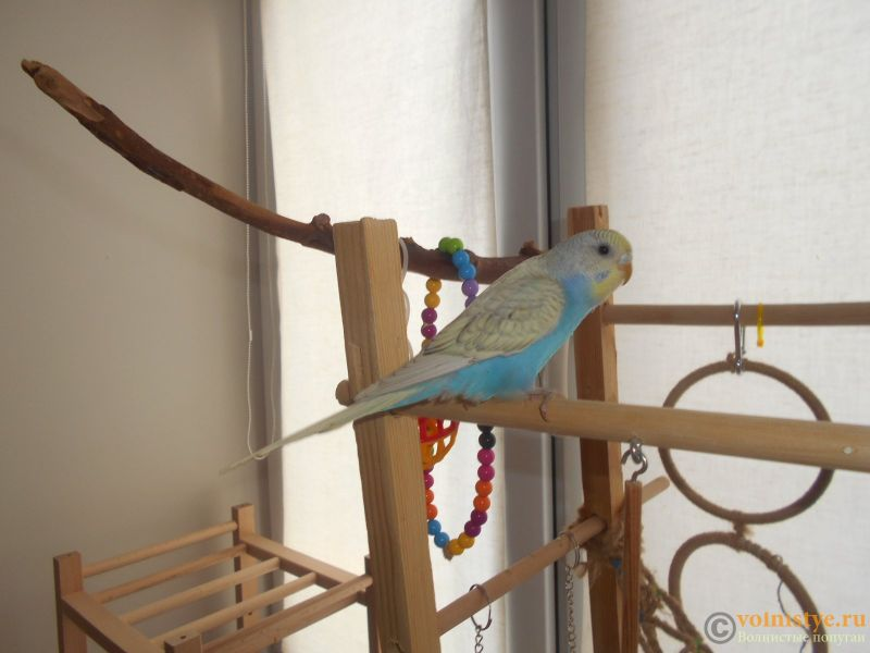 Мои птички - DSCN2665.JPG
