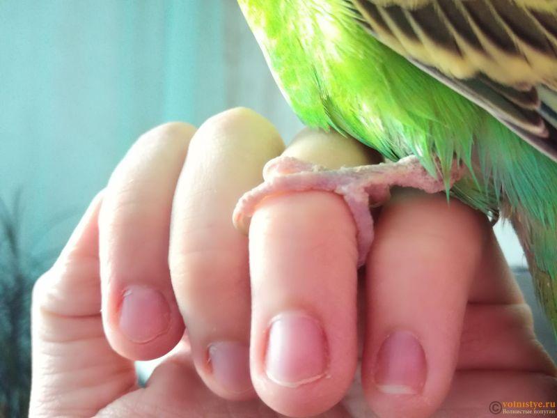 Попугай грызет свою лапку !!!!! Что делать? - IMG_20180408_115723.jpg