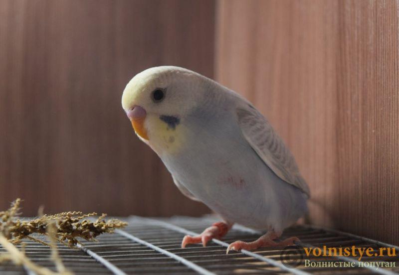 Радужная красота - птенцы от Тора и Мелисы - DSC_5722.JPG