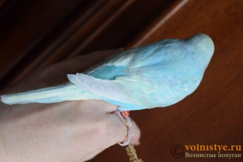Радужная красота - птенцы от Тора и Мелисы - DSC_5740.JPG