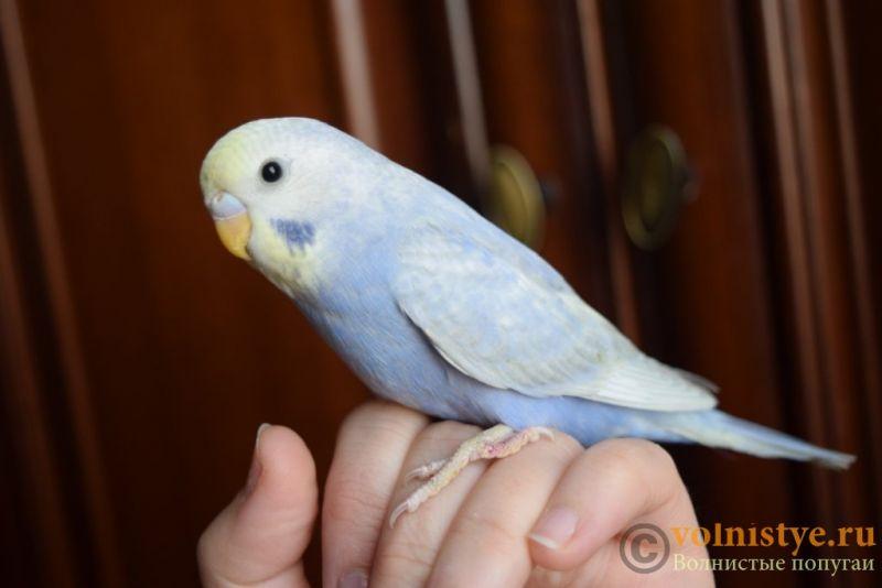 Радужная красота - птенцы от Тора и Мелисы - DSC_5711.JPG