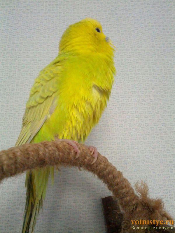 Попугаи Тякшанни - iJl446znW_Y.jpg