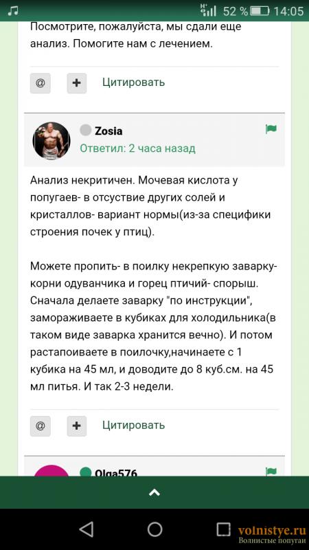 Волнистого попугая стошнило зерном один раз - Screenshot_2018-04-14-14-05-18.png