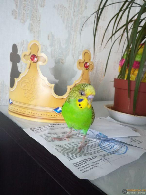 Попугай грызет свою лапку !!!!! Что делать? - IMG_20180417_143018.jpg