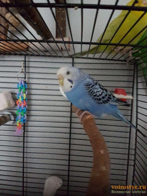 Попугаи Тякшанни - lGSqyttcPgU.jpg