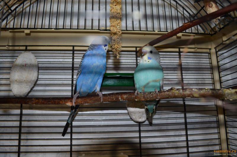 Гнездование Стива и Поли. Вторая попытка. - DSC_0058.JPG