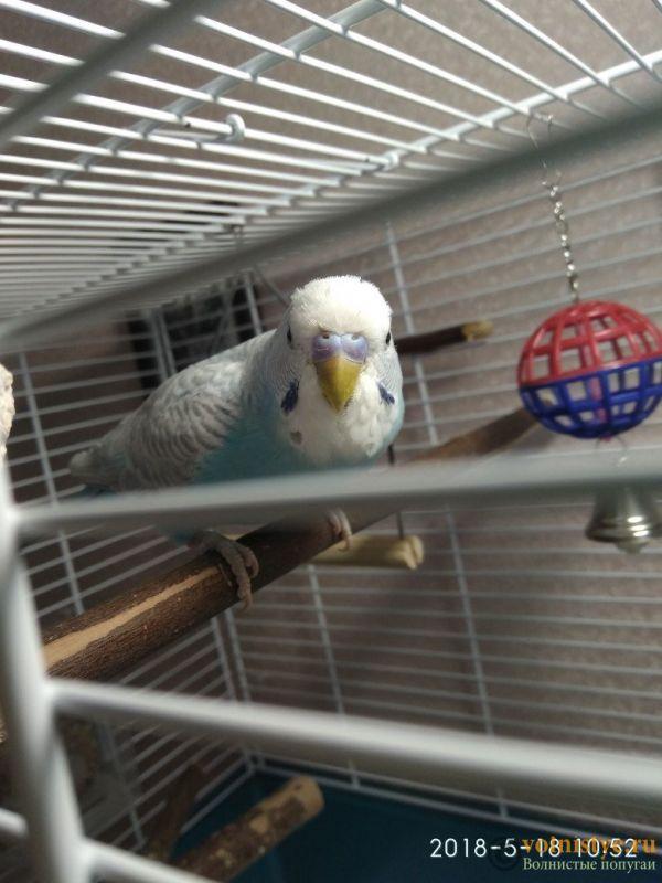 Здоров ли попугай? Изменения в помете у попугая - 2.jpg