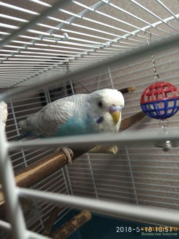 Здоров ли попугай? Изменения в помете у попугая - 3.jpg
