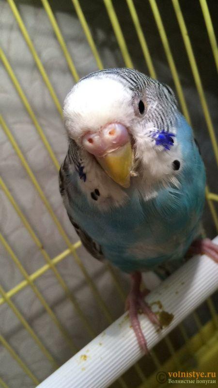 у попугая закрыты глаза - FC174C14-A578-43C4-9AD5-505455AA5E57.jpeg