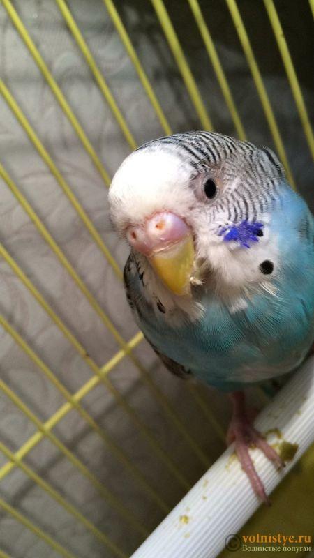 у попугая закрыты глаза - 627A67AE-AB86-40D1-94C8-61058E2AE2E7.jpeg