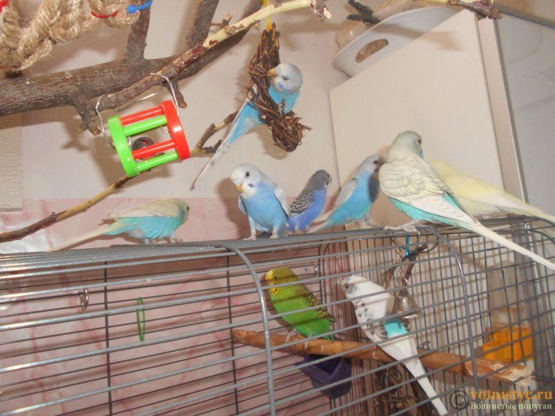 Мои птички - DSCN2975.JPG