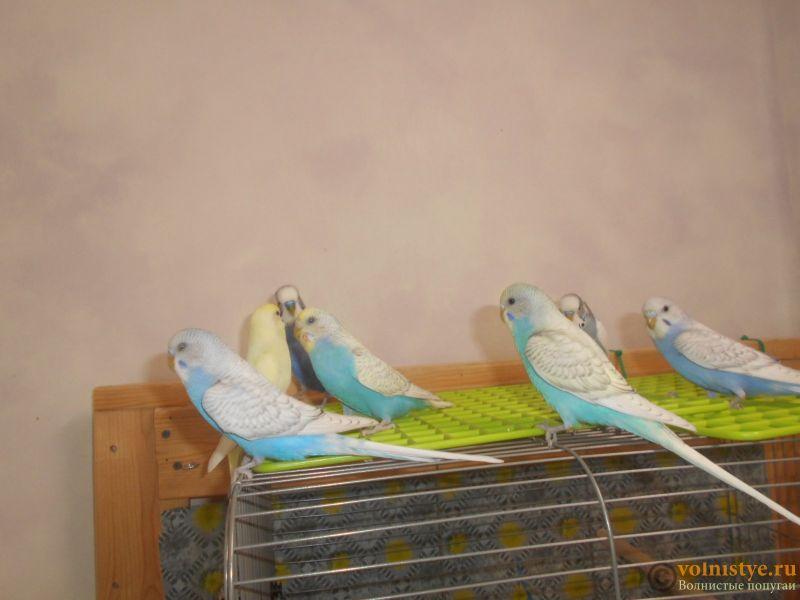 Мои птички - DSCN2982.JPG