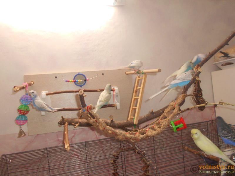 Мои птички - DSCN2978.JPG