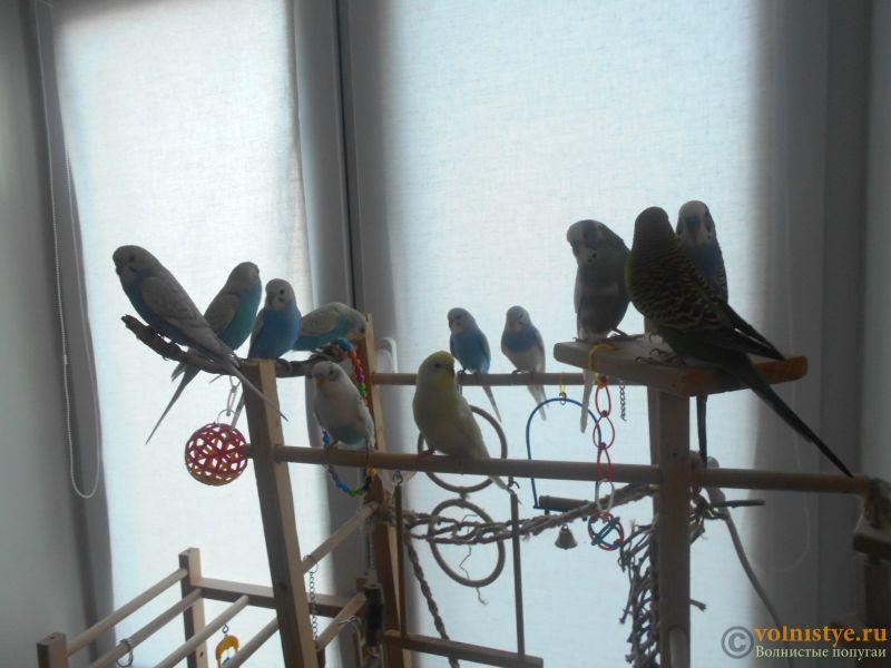 Мои птички - DSCN2989.JPG