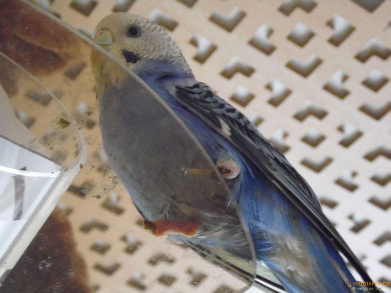 проблема с попугашкой - SAM_0938.JPG