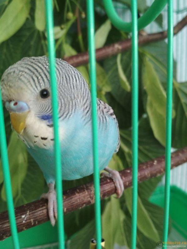 Попугай стал кусаться - IMG_20180605_201319.jpg