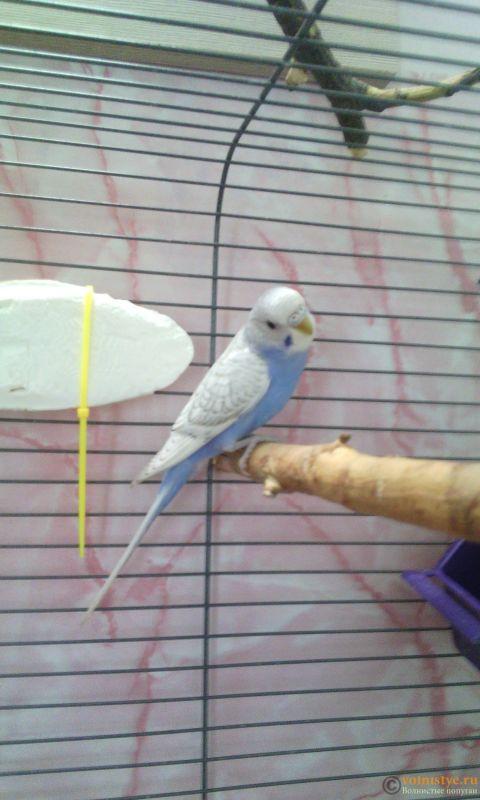 Мои птички - IMG_20180607_184410.jpg