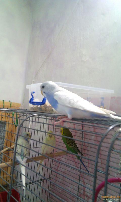 Мои птички - IMG_20180607_184425.jpg