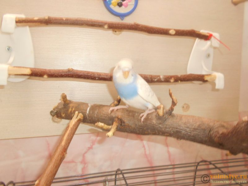 Мои птички - DSCN3013.JPG