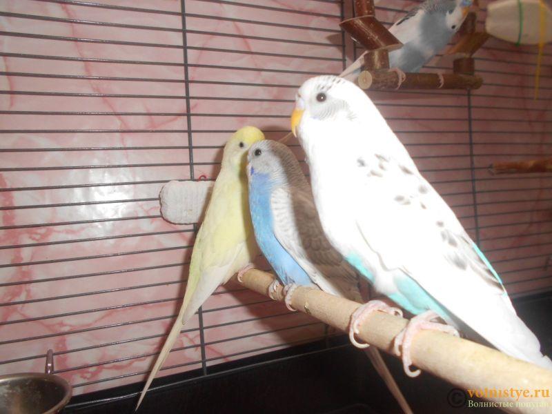 Мои птички - DSCN3024.JPG