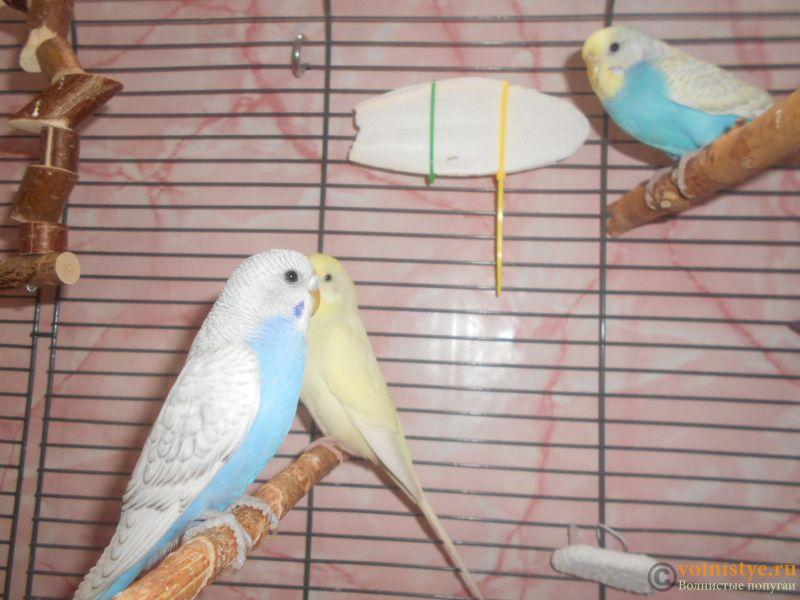 Мои птички - DSCN3028.JPG