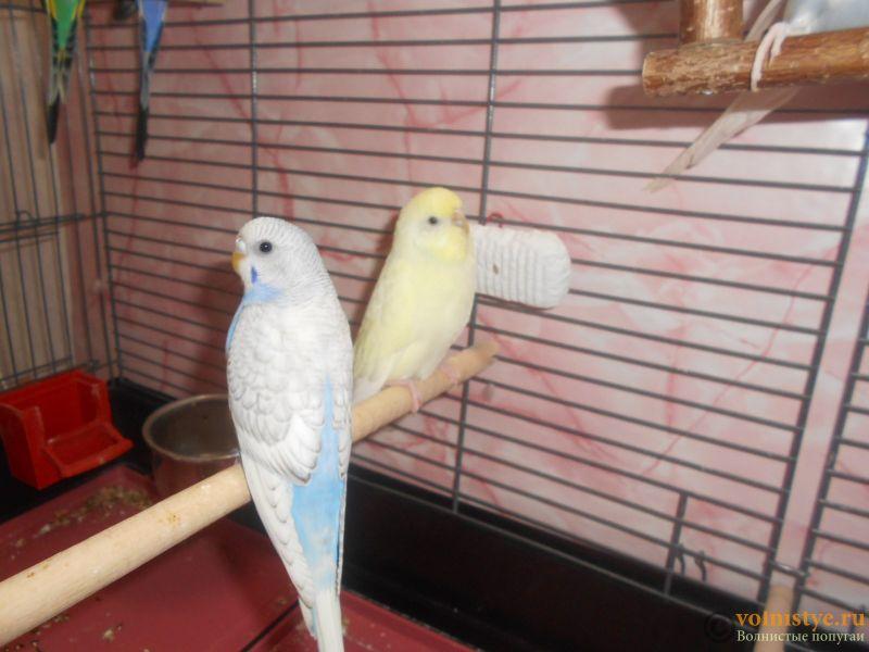 Мои птички - DSCN3026.JPG