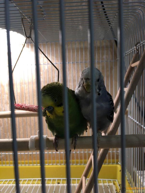 Волнистому попугайчику плохо - IMG_0980.JPG