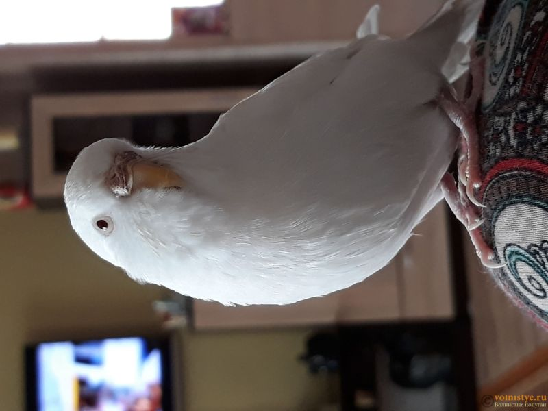 Птичка - 20180616_161708.jpg