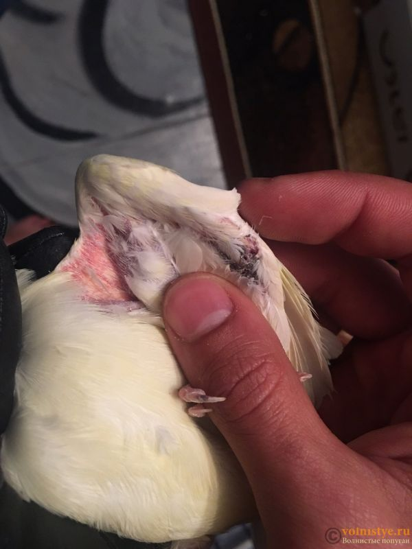 Что с глазиками попугая - IMG_5475-25-06-18-08-00 (1).JPG