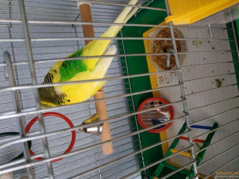 нужна очень консультация орнитолога, заболел попугай. - 1533628068867630537627241505124.jpg
