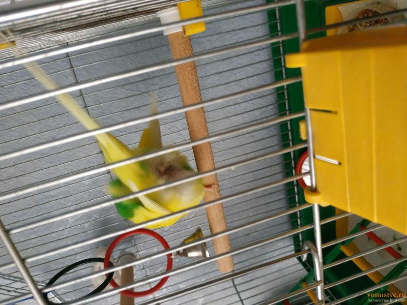 нужна очень консультация орнитолога, заболел попугай. - 1533628107074656764370441297990.jpg