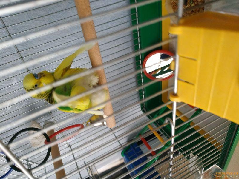 нужна очень консультация орнитолога, заболел попугай. - 15336282209177440282544629929521.jpg
