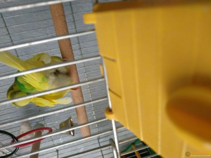 нужна очень консультация орнитолога, заболел попугай. - 15336283230609171764223401585235.jpg