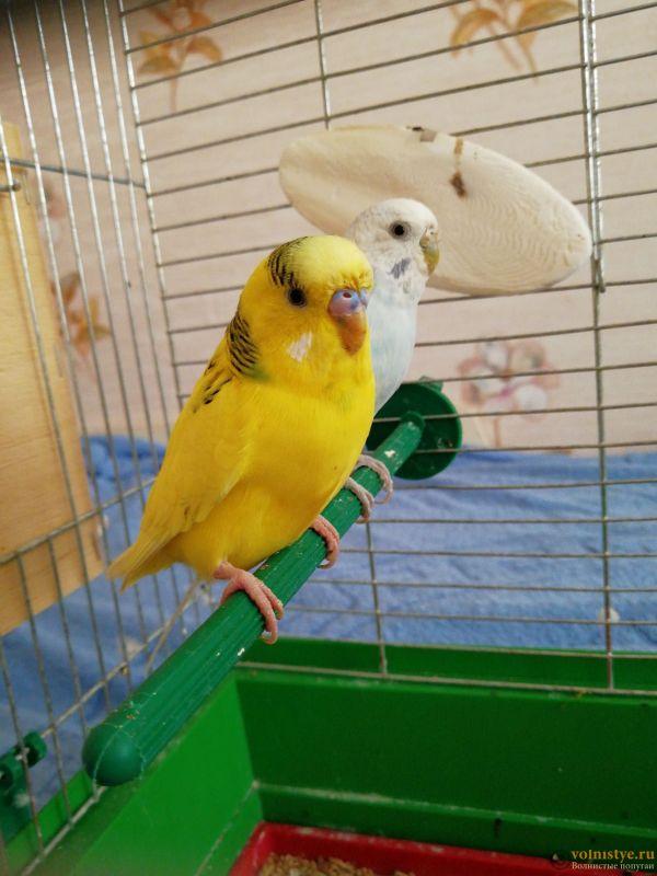 На фото изображена кутка с гнездовым домиком - 153370858564449240363.jpg