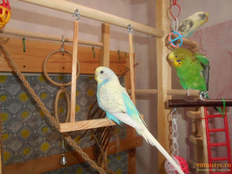 Мои птички - DSCN3086.JPG