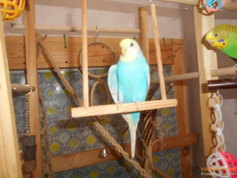 Мои птички - DSCN3089.JPG