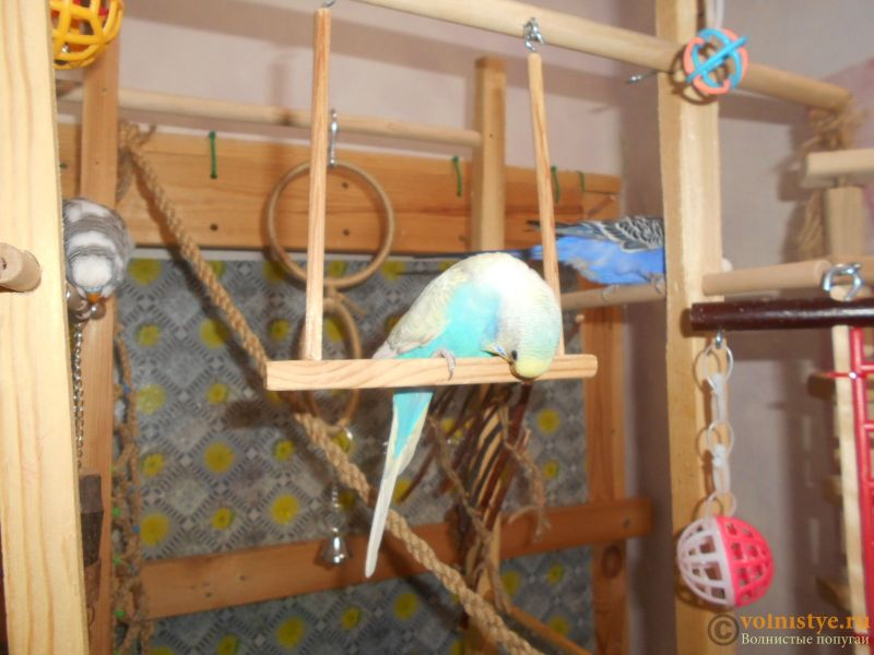Мои птички - DSCN3098.JPG