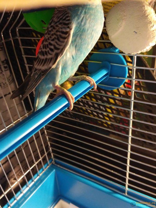 У попугайчика зелёные клоака и лапки - IMG_20180810_184128.jpg