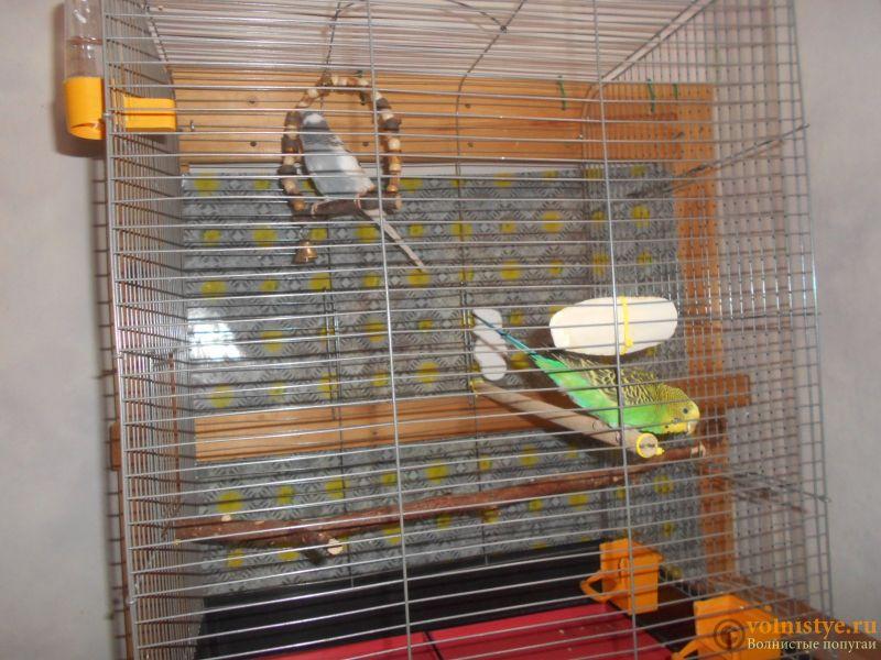 Мои птички - DSCN3128.JPG