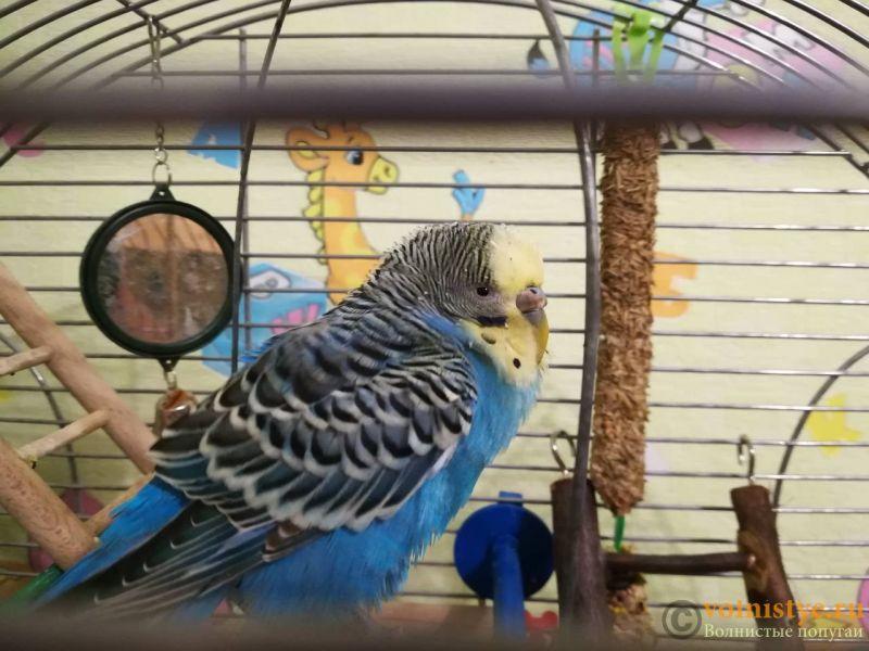 Помогите определить здоров ли попугай? - viber image.jpg