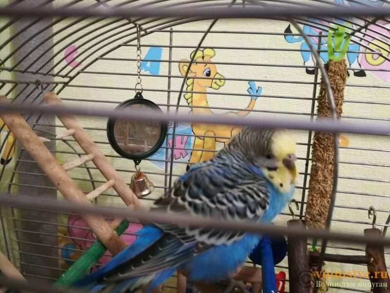 Помогите определить здоров ли попугай? - viber image1.jpg