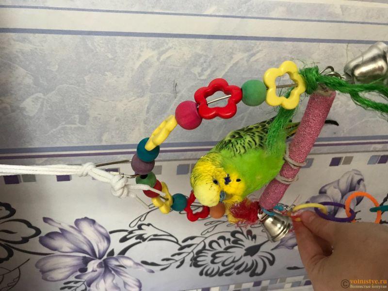 Фотографии  для статьи  окрасы волнистых попугаев - 86E43314-64BA-4AC1-B775-1D101531C3D8.jpeg