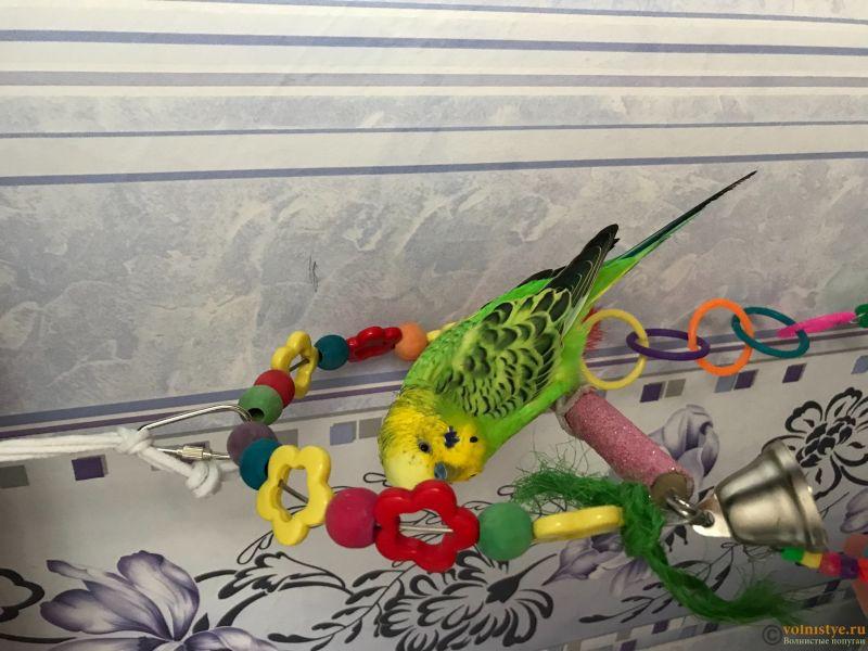 Фотографии  для статьи  окрасы волнистых попугаев - 8711EE00-6445-4366-8FC9-EB6A888B20FE.jpeg