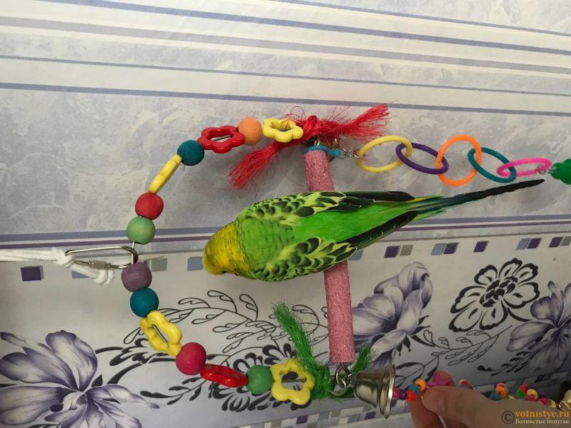 Фотографии  для статьи  окрасы волнистых попугаев - 4F95D301-B077-4FCD-BEFC-77FC6B6635A9.jpeg