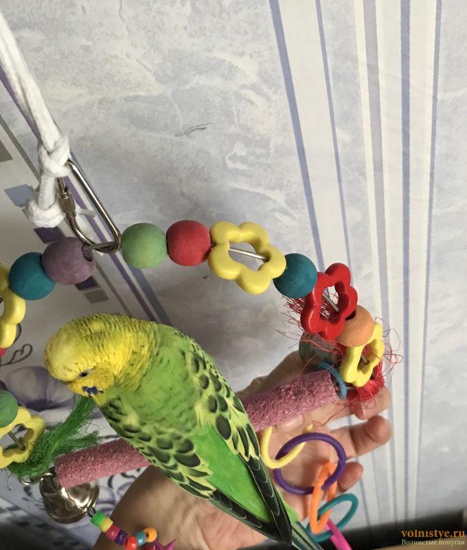 Фотографии  для статьи  окрасы волнистых попугаев - 295A0E69-95C7-4BB6-AA82-DF26124756EF.jpeg